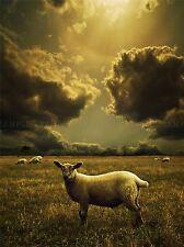 Pequeño Cordero Oveja Storm iluminación dinámica campo Flock impresión arte cartel bmp535a