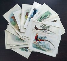 1896 Ornithology, Lot of 25x Antique Prints, Pheasants, Partridge, Quail - Lloyd