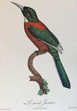Le grand Jacamar d'après Barraban gravé par Grémillier circa 1961 oiseau bird