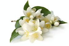 Aromatix Premium SWEET JASMINE Candle Making Fragrance Oil  quantity 10ml