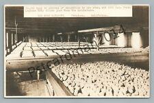 """33,000 Eggs"" Bihn Chicken Hatchery PETALUMA California RPPC Antique Farm Photo"