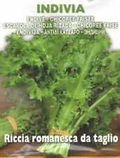 VEGETABLE  ENDIVE ROMANESCA  10 GRAM APPROX 7000 ITALIAN SEEDS