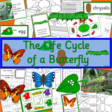 Life cycle of a Butterfly resource CD -display, Spring, Science, Caterpillar