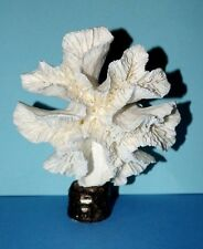 VINTAGE  WHITE REEF CAULIFLOWER CORAL SHELL LOOKS LIKE A HIBISCUS FLOWER