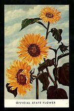 Sunflowers postcard Topeka Kansas KS Official State Flower Publicity Free Chrome