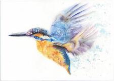 HELEN APRIL ROSE original KINGFISHER  A3 art bird watercolour painting 532