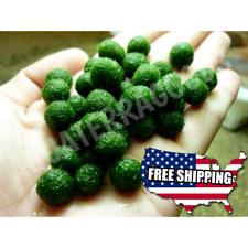 6 NANO Marimo Moss Ball!! Cladophora Live Aquarium Plants Fish Shrimp USA Seller