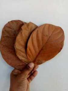 Dried Jack Fruit leaves Organic Bio Film Shrimp Aquarium Ceylon Natural 100 PCs
