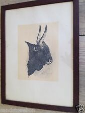 ANTIQUE ITALIAN SPAIN ETCHING BULL ART DATED 1850 SIGNED