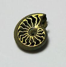 Rare Russian Volga River PYRITE Ammonite, Unique Cephalopod, energetic #4
