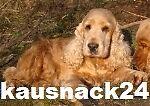 kausnack24