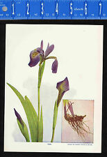 IRIS Botanical Plant - 1899 Nature Print Plus BONUS