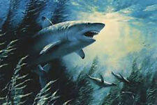George Luther Schelling THE PROWLER 21x29 Great White Shark 94/600 Ltd Edition