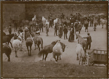 France, Marché aux chevaux, ca.1900, Vintage citrate print Vintage citrate print