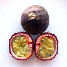 Passiflora edulis - maracuya morado - 25 semillas - fruta de la pasión - seeds