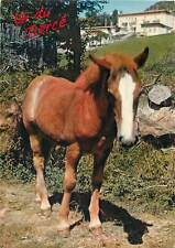Animals young brown horse   Postcard