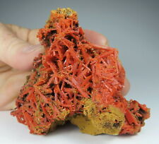 Gorgeous CROCOITE crystals * Adelaide Mine * Australia