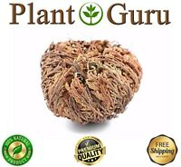 Jericho Flower - 1 Pack - Rose of Jericho, Resurrection Flower, Whole Dried Herb