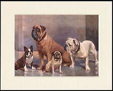 FRENCH BULLDOG MASTIFF PUG ENGLISH BULLDOG LOVELY DOG GROUP PRINT READY MOUNTED