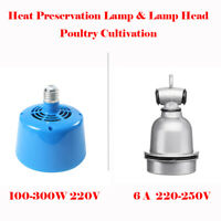 Poultry Cultivation Heat Lamp Bulb Thermostat for Pet Pig Chicken Egg Incubators