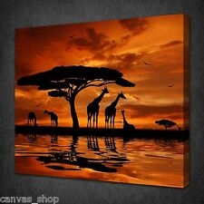 HERD OF GIRAFFE AFRICAN SUNSET WALL ART PICTURE CANVAS PRINT READY TO HANG