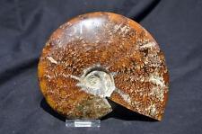 "e2027zxx WHOLE Ammonite GREAT SUTURE PATTERN 110myo Dinosaur Fossil 160mm 6.3"""
