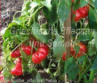 🔥 🌶️ Szuszanna * Apfel-Paprika Ungarn* Rekordernte* 10 Samen
