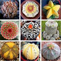 200 PCS Seeds Rare Mix Lithops Stones Succulent Cactus Organic Bonsai Plants New