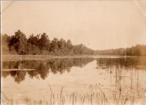 Nature, forêt et cours d eau Vintage silver print Tirage argentique  8x11