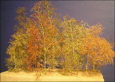 15 Seemoos bzw. Meerschaum Bäume für Modelleisenbahn und Diorama, sehr filigran