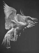 Julio Cesar Delgado Dance of The Birds 13 on Paper