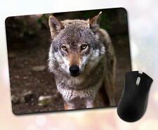 Animals ~ Wolf, Forest, Close Up, Menacing, Bright Eyes, Cute ~ Vivid Mouse Pad