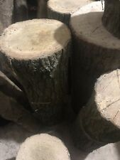 Large Oak Tree Trunk Section/Log/Wood - Carving/Woodworking/Planter - 17-20x30cm