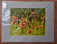 Wild Indian Blanket Flowers,Gaillardia pulchella Flowers,Wildflowers,nature pic
