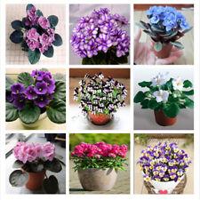 100pcs Violet Flower Seeds Rare Garden Bonsai Perennial Beautiful Purple Plant