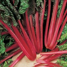 Suffolk Erbe-foglie di barbabietole RABARBARO Chard-Organic - 175 Semi