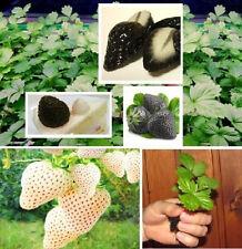 Sehr lecker ! Winterharte schwarze & weiße Erdbeeren / weiss blühend  !  Samen