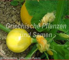 🔥 Zitronen-Zucchini gelbe Zucchini * Feingemüse RARITÄT 5 frische Samen Balkon