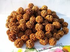 WHOLESALE LOT 20 PCS 6 SIX MUKHI FACE RUDRAKSHA RUDRAKSH NEPAL18-20MM LOOSE BEAD