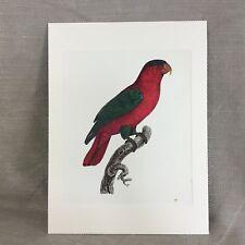 Vintage Art Print BARRABAND Collared Parrot Lory Parakeet RARE Exotic Birds