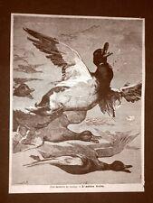 Anitra o anatra ferita Caccia Quadro del 1879 Autore da identificare (Doré?)