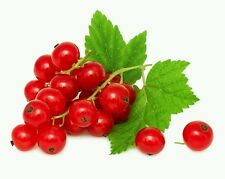 Red Currants ~ 30 Seeds ~ 2017 ~ Free Shipping ~ Us Seller.