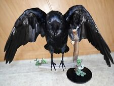Stuffed raven imitation flight Taxidermy Bird Mount