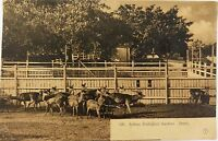 .EARLY 1900'S SYDNEY ZOOLOGICAL GARDENS, DEERS NSW POSTCARD. GIOVANARDI NO 199