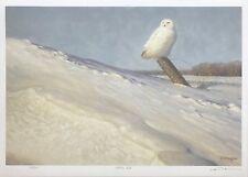 "CLAUDIO D'ANGELO ""WHITE OWL"" | HAND SIGNED PRINT | BIRDS | MAKE AN OFFER GALLART"