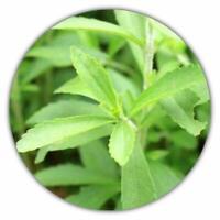 Sugar Substitute Stevia Sugar Substitute – 100 Seeds