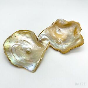 2er Set Austern mit Echt Perle Perlmuttschimmer Muschel Perlmutt - 2 Stück 6cm