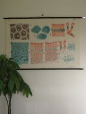 VINTAGE ROLL DOWN SCHOOL CHART POSTER OF HISTOLOGY EPITHELIAL CELLS BIOLOGY SKIN