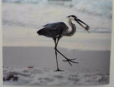 Having a Meal on the Sand, 11x14 signed photograph