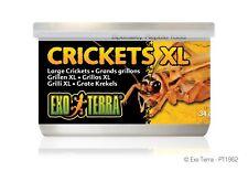 Exo Terra Canned Crickets XL Reptile Lizard Food 34g